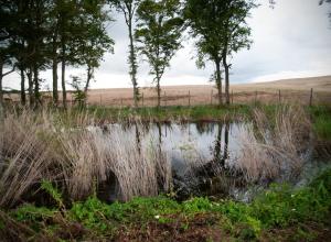 Respecter la biodiversité est l'un des enjeux du projet