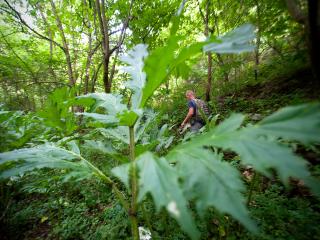 Le respect de l'environnement et la préservation de la biodiversité