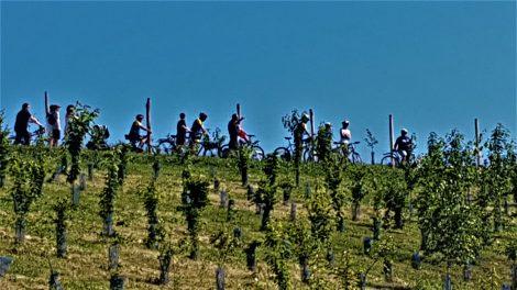 ECT - Cyclistes au Parc de l'arboretum à Moissy Cramayel