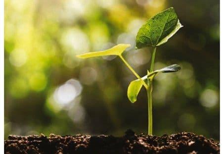 ECT produit du substrat fertile, une alternative éco-responsable à la terre végétale