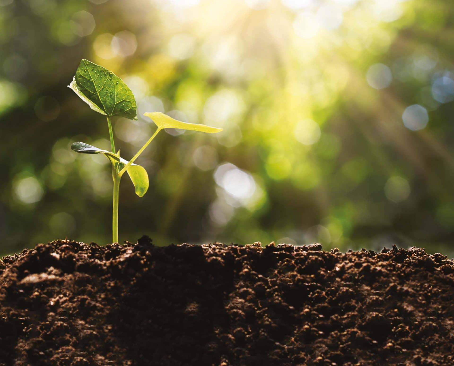Urbafertil, une alternative à la terre végétale