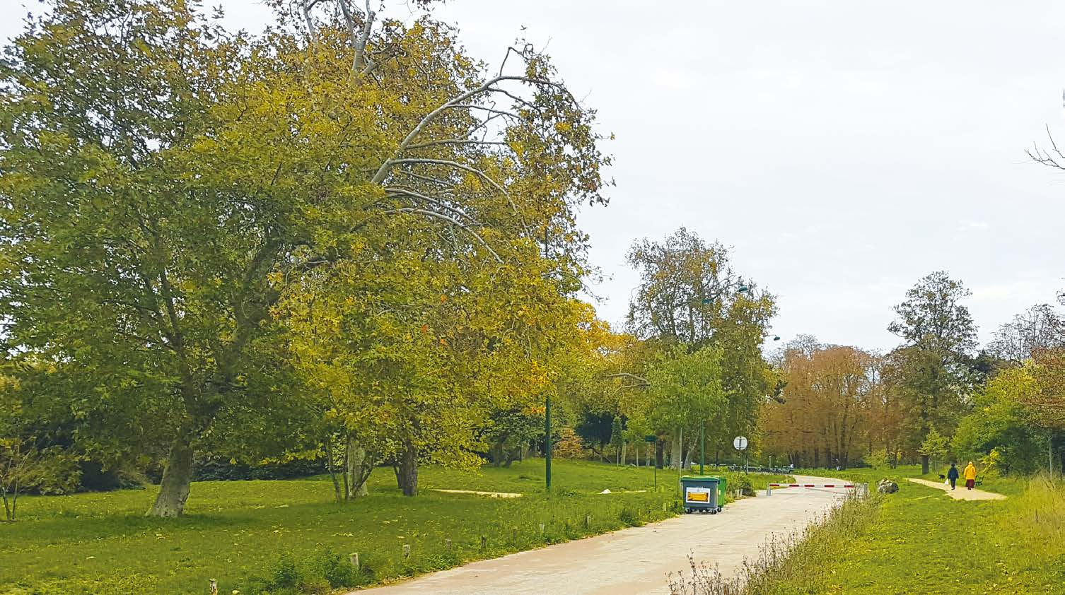 Substrat fertile au Bois de Vincennes